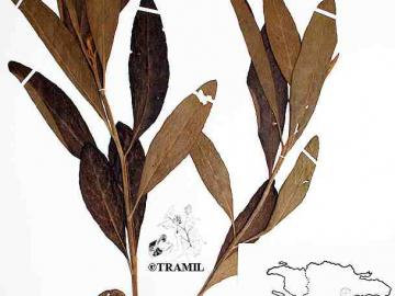 Tramil Program Of Applied Research To Popular Medicine In The